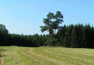 jihočeské lesy